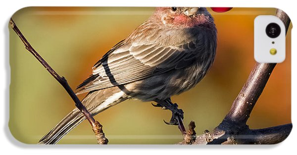 House Finch IPhone 5c Case