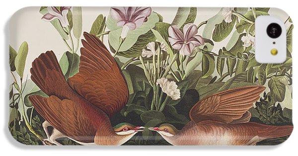 Key West Dove IPhone 5c Case by John James Audubon