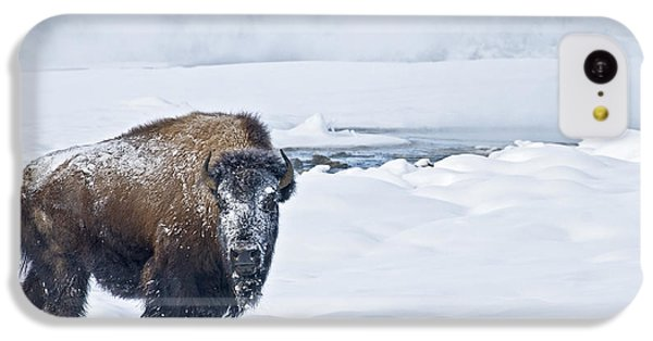 Lone Bison IPhone 5c Case
