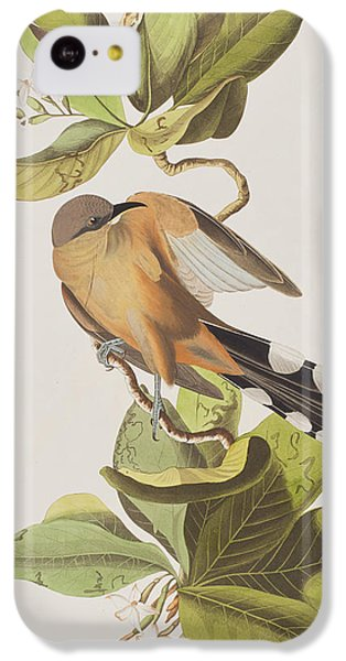 Cuckoo iPhone 5c Case - Mangrove Cuckoo by John James Audubon