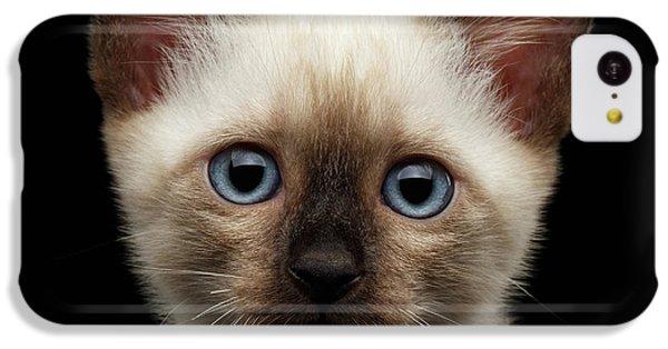 Cat iPhone 5c Case - Mekong Bobtail Kitty With Blue Eyes On Isolated Black Background by Sergey Taran