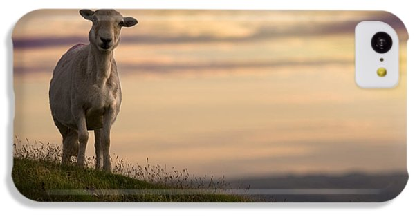 Sheep iPhone 5c Case - On The Top Of The World by Angel Ciesniarska