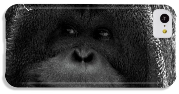 Orangutan IPhone 5c Case by Martin Newman