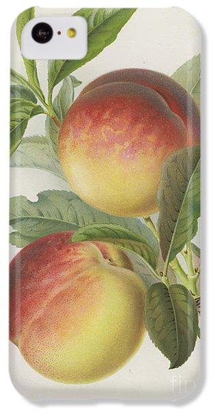 Peaches IPhone 5c Case
