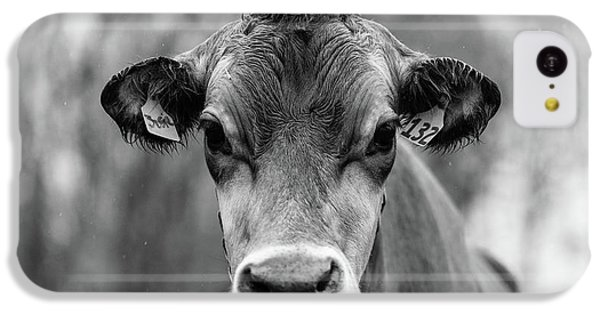 iPhone 5c Case - Portrait Of A Dairy Cow In The Rain Stowe Vermont by Edward Fielding
