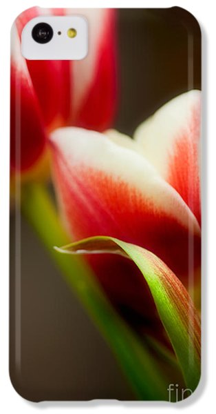 Tulip iPhone 5c Case - Red And White Tulips by Nailia Schwarz