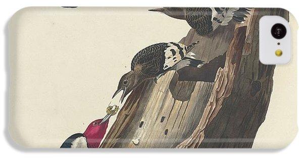 Red-headed Woodpecker IPhone 5c Case