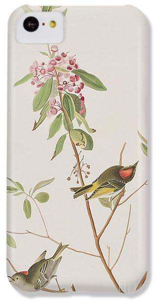 Ruby Crowned Wren IPhone 5c Case by John James Audubon