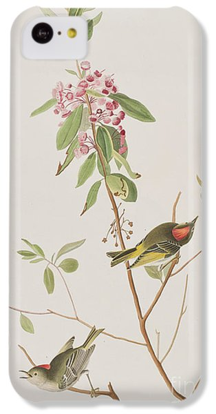 Ruby Crowned Wren IPhone 5c Case