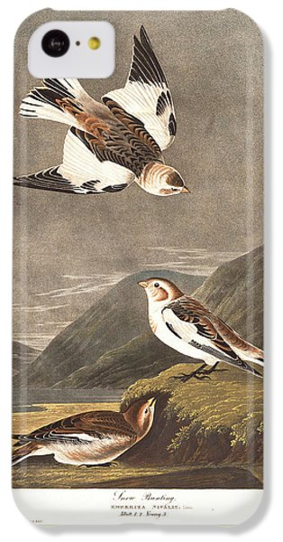 Snow Bunting IPhone 5c Case by Rob Dreyer