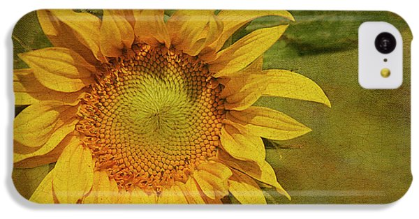 Sunflower iPhone 5c Case - Sunflower by Cindi Ressler