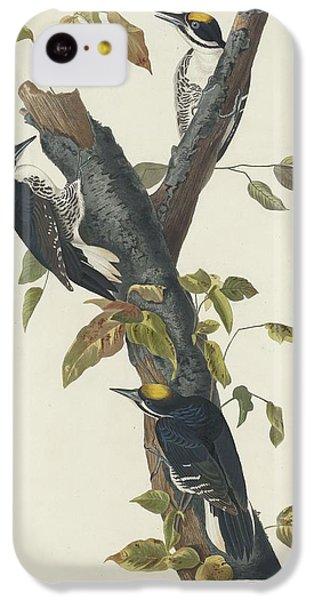 Three-toed Woodpecker IPhone 5c Case