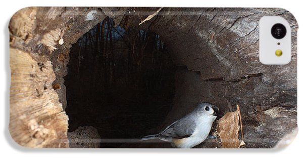 Tufted Titmouse In A Log IPhone 5c Case