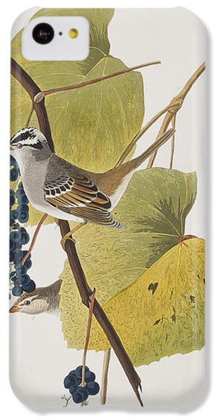 White-crowned Sparrow IPhone 5c Case by John James Audubon