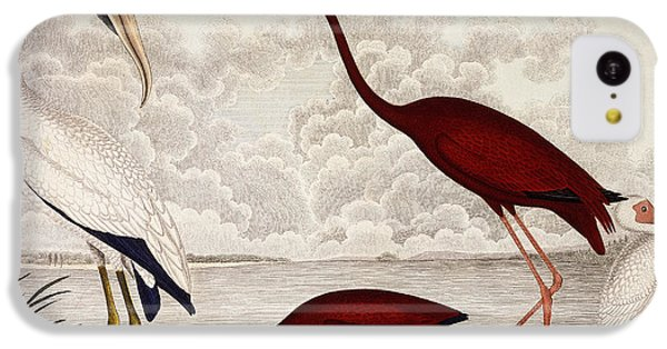 Ibis iPhone 5c Case - Wood Ibis, Scarlet Flamingo, White Ibis by Alexander Wilson