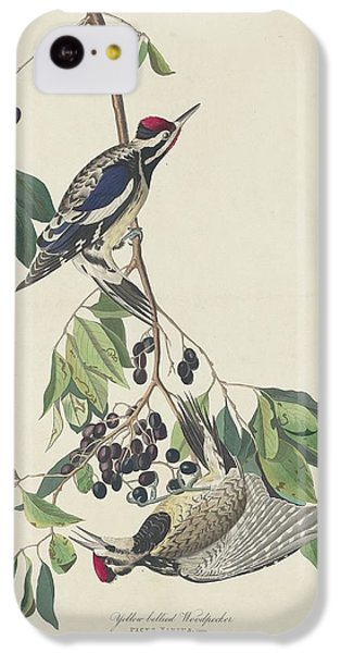 Yellow-bellied Woodpecker IPhone 5c Case by Dreyer Wildlife Print Collections