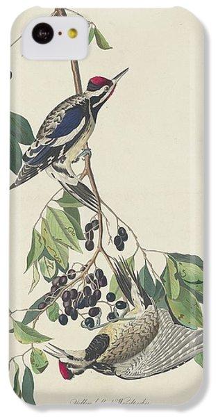 Yellow-bellied Woodpecker IPhone 5c Case by Anton Oreshkin