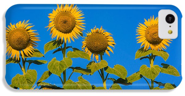 Sunflower iPhone 5c Case - Field Of Sunflowers by Bernard Jaubert