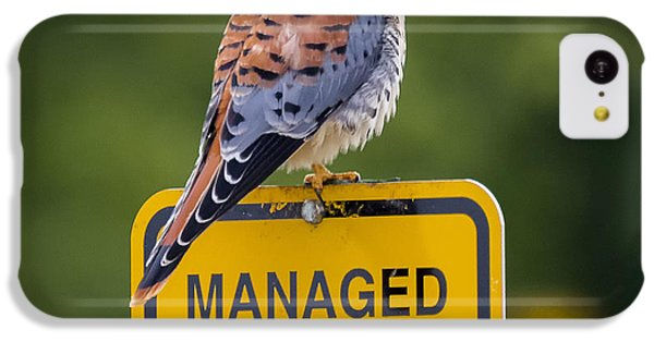 American Kestrel IPhone 5c Case