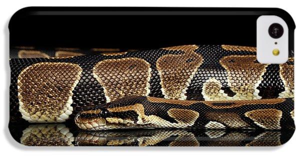 Ball Or Royal Python Snake On Isolated Black Background IPhone 5c Case