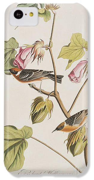 Bay Breasted Warbler IPhone 5c Case by John James Audubon