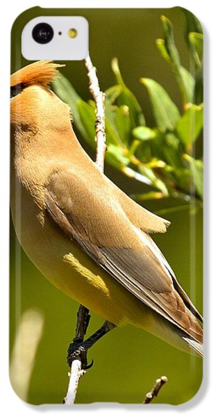 Cedar Waxwing Closeup IPhone 5c Case by Adam Jewell