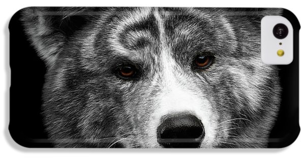 Closeup Portrait Of Akita Inu Dog On Isolated Black Background IPhone 5c Case