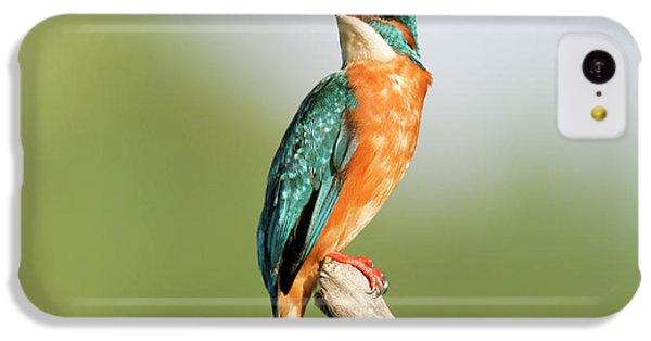 Common Kingfisher Alcedo Atthis IPhone 5c Case