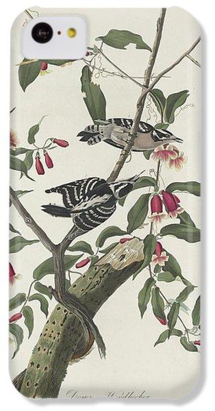 Downy Woodpecker IPhone 5c Case by Anton Oreshkin