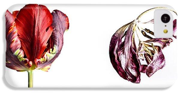 Tulip iPhone 5c Case - Fading Beauty by Nailia Schwarz