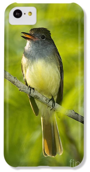 Great Crested Flycatcher IPhone 5c Case by Anthony Mercieca