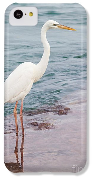 Great White Heron IPhone 5c Case by Elena Elisseeva