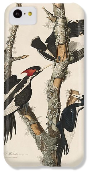 Woodpecker iPhone 5c Case - Ivory-billed Woodpecker by Dreyer Wildlife Print Collections