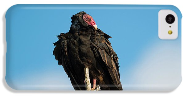 Looking For A Meal IPhone 5c Case by Mike Dawson