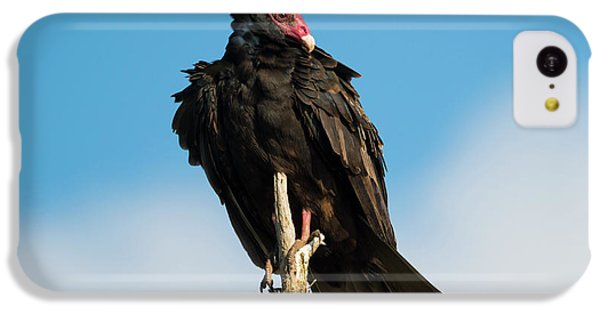 Buzzard iPhone 5c Case - Looking For A Meal by Mike Dawson