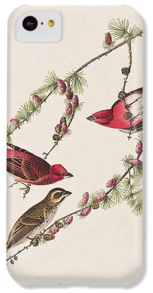 Purple Finch IPhone 5c Case by John James Audubon