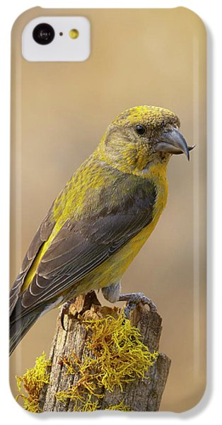 Red Crossbill IPhone 5c Case