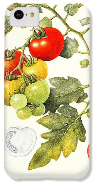 Tomatoes IPhone 5c Case by Margaret Ann Eden