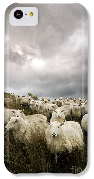 Sheep iPhone 5c Case - Welsh Lamb by Angel Ciesniarska