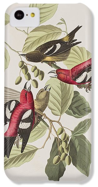 White-winged Crossbill IPhone 5c Case