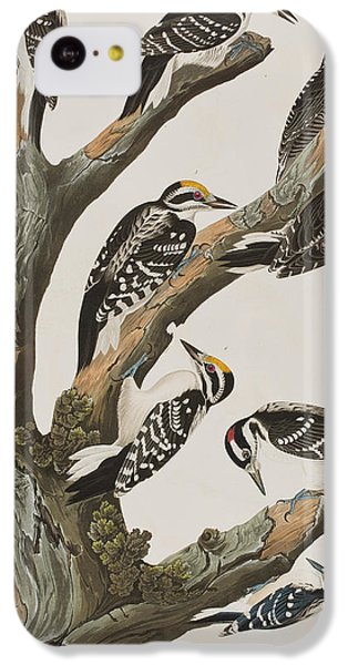Woodpeckers IPhone 5c Case by John James Audubon