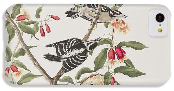 Downy Woodpecker IPhone 5c Case