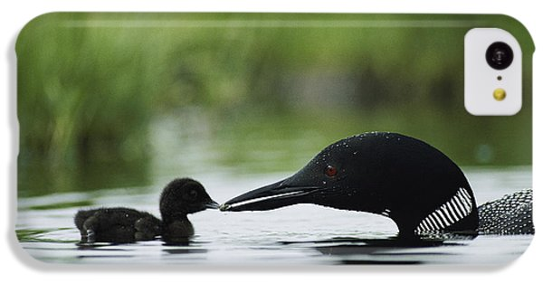 Loon iPhone 5c Case - Loons by Michael S Quinton