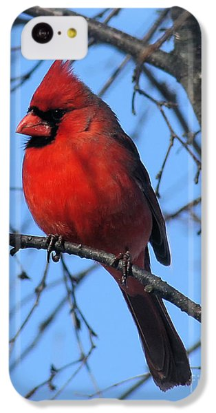 Northern Cardinal IPhone 5c Case