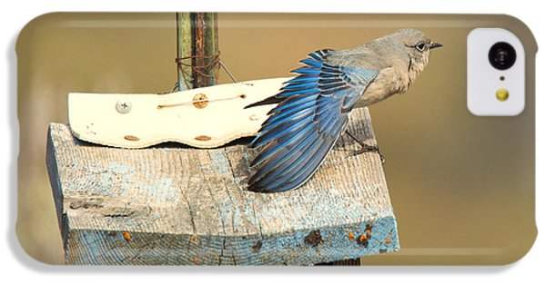 Spread Your Wings IPhone 5c Case by Mike Dawson