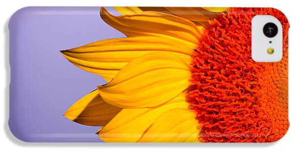 Sunflower iPhone 5c Case - Sunflowers by Mark Ashkenazi