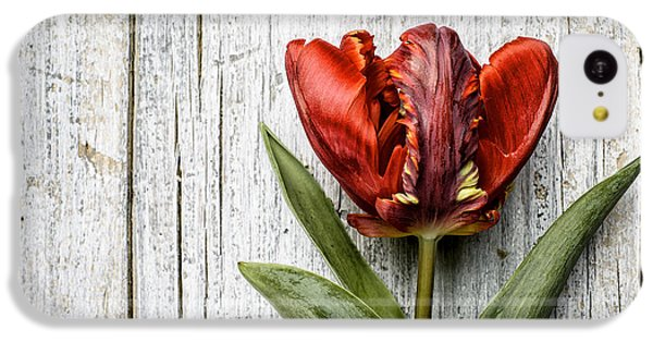 Tulip iPhone 5c Case - Tulip by Nailia Schwarz