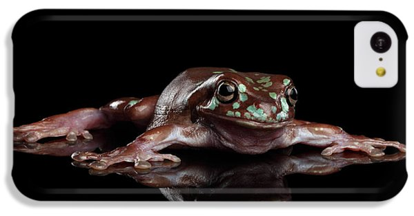 Australian Green Tree Frog, Or Litoria Caerulea Isolated Black Background IPhone 5c Case by Sergey Taran