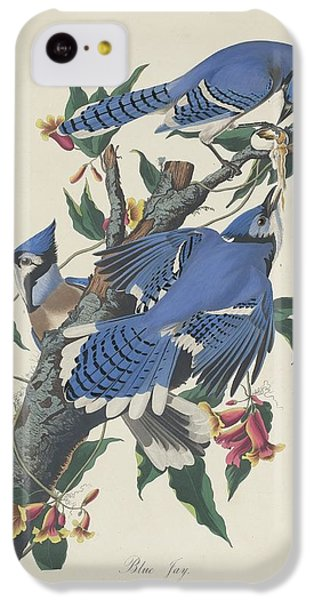 Blue Jay IPhone 5c Case by Rob Dreyer