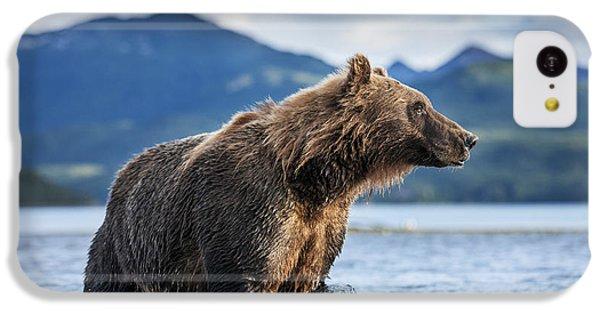 Coastal Brown Bear  Ursus Arctos IPhone 5c Case by Paul Souders